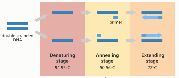 Các thang nhiệt độ trong kỹ thuật pcr